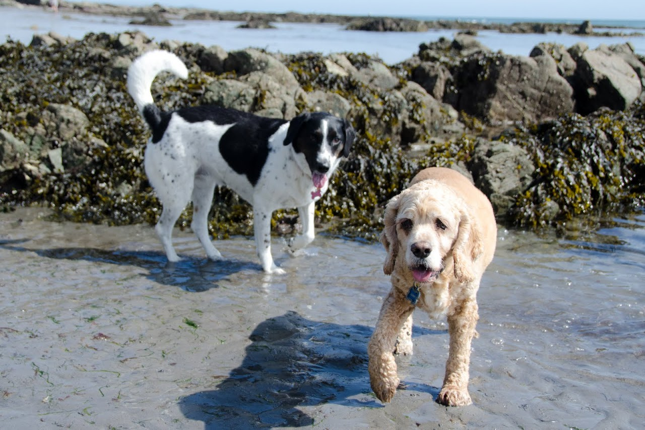 Chewy and Abby in Cornwall