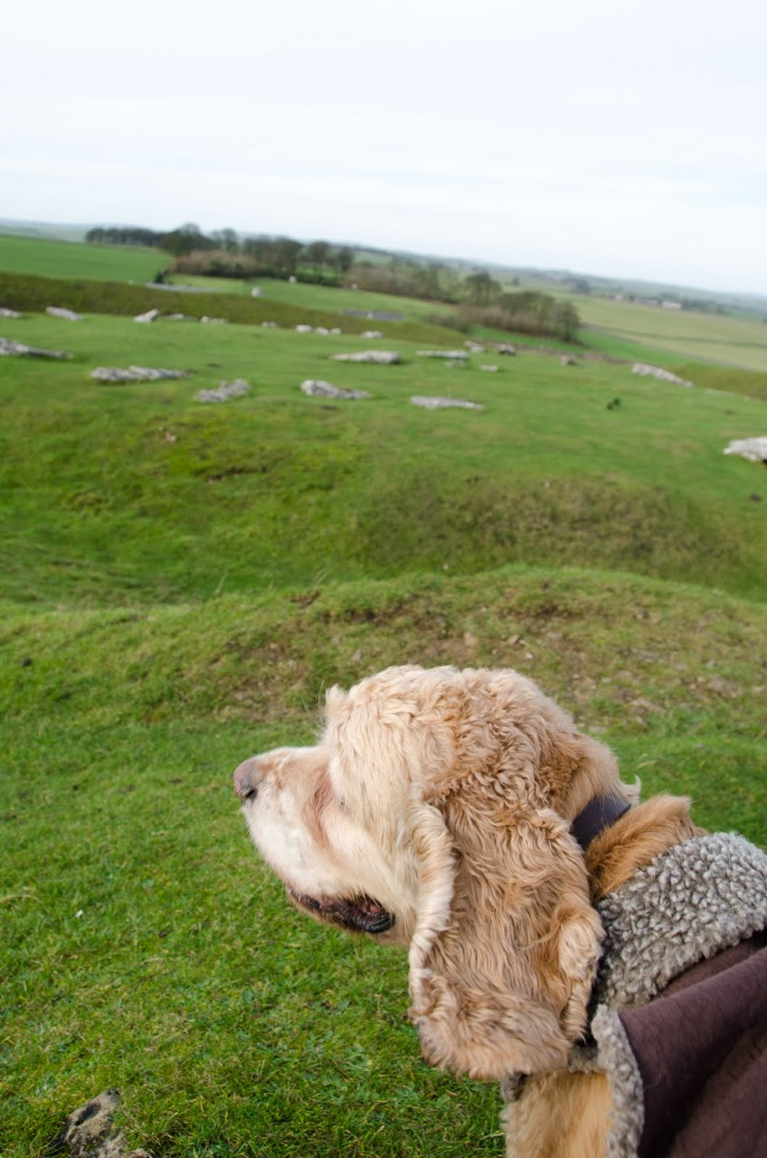 Chewy at Arbor Low